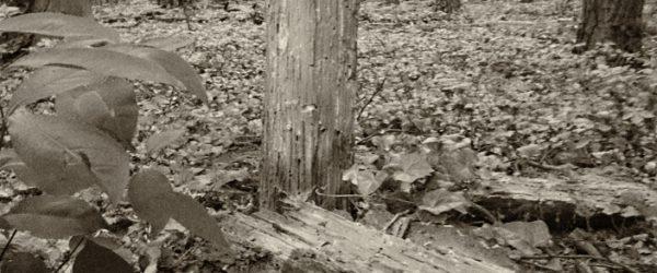 Baum. Foto: Hufner