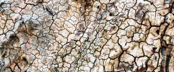 Totes Holz lebt länger. Foto: Hufner