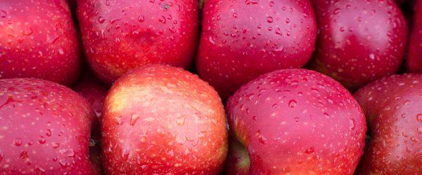 Apfel. Foto: Hufner