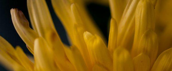 Pflanzung von Avantgarde. Foto: Hufner
