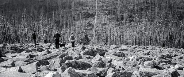 Blick vom Gipfel in die Niederungen eines toten Waldes. Foto: Hufner