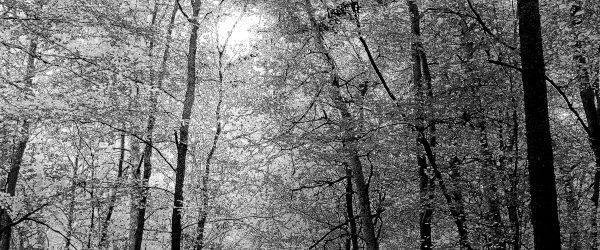 Im Wald. Foto: Hufner