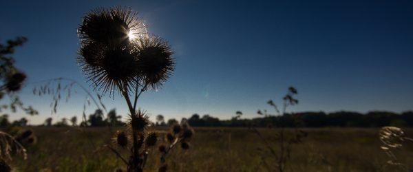 Kletten an der Sonne. Foto: Hufner