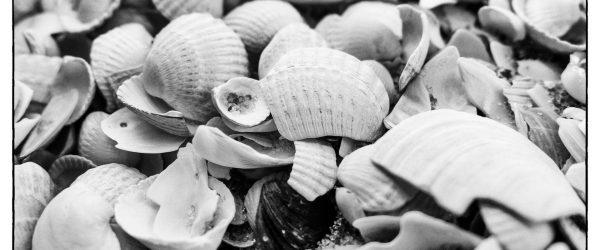 Muscheln unter Muscheln. Foto: Hufner