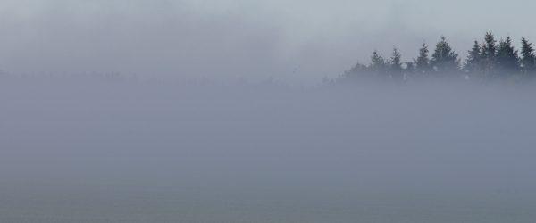 Nebel über der Lieblingswiese. Foto: Hufner