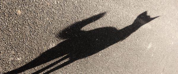 Schatten. Foto: Hufner