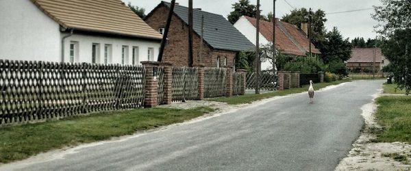 Storch auf Dorfstraße. Foto: Hufner