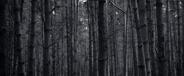 Baum voll Wälder. Foto: Hufner