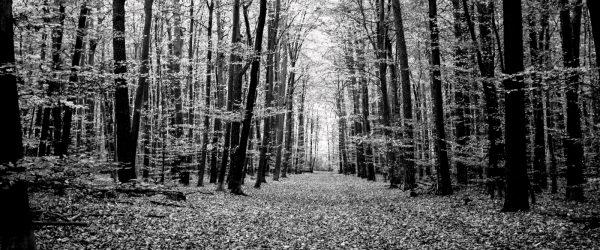 Mancher Jurist sieht den Wald vor lauter Bäumen nicht. Foto: Hufner