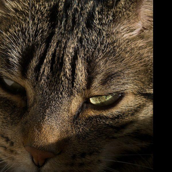 Die Katze denkt