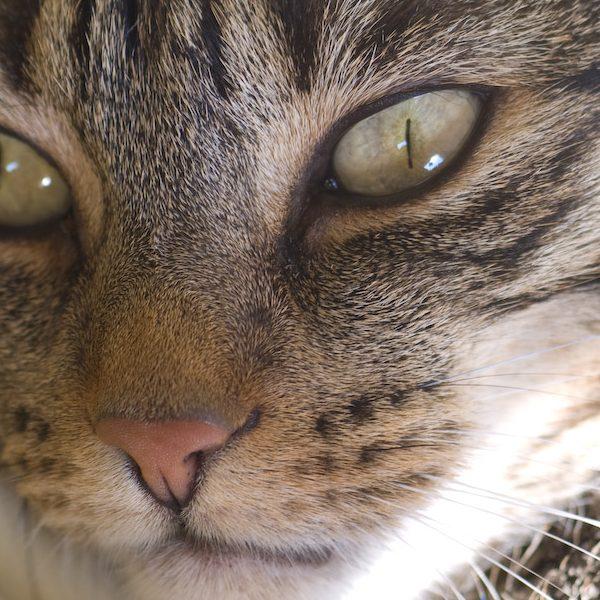 KatzeMatze